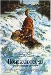 Ver Película De vuelta a casa, un viaje increíble (1993)