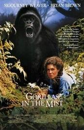 Gorilas en la niebla - 4k