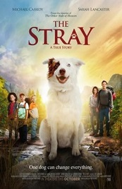 Ver Pelicula The Stray (2017)