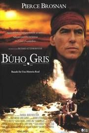 Buho Gris